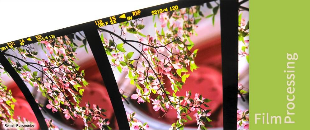 photo-lab-services/film-processing